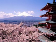 japan mountain blossom
