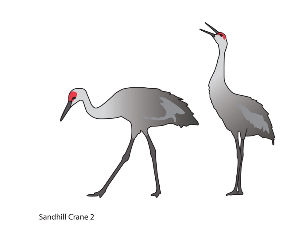 ALA-fauna-Sandhill