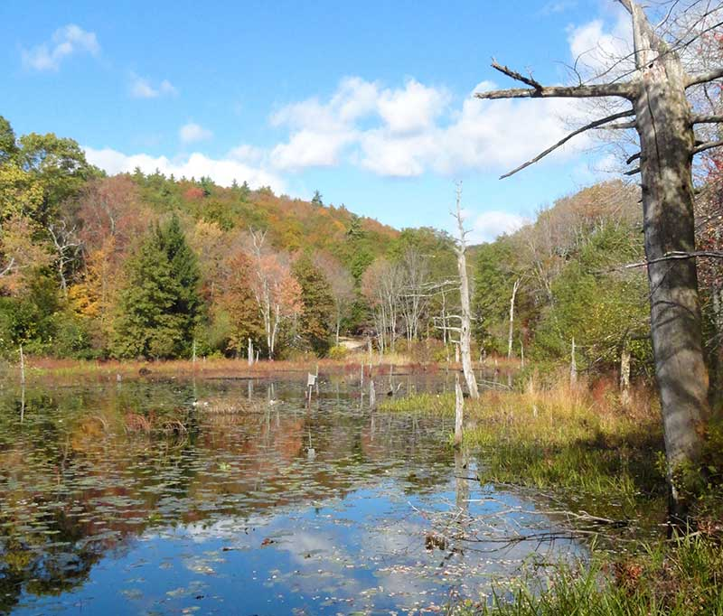 Houghton's Pond is the most visited park in the Mass DCR Metro South region with an average of 5,000 visitors a day.