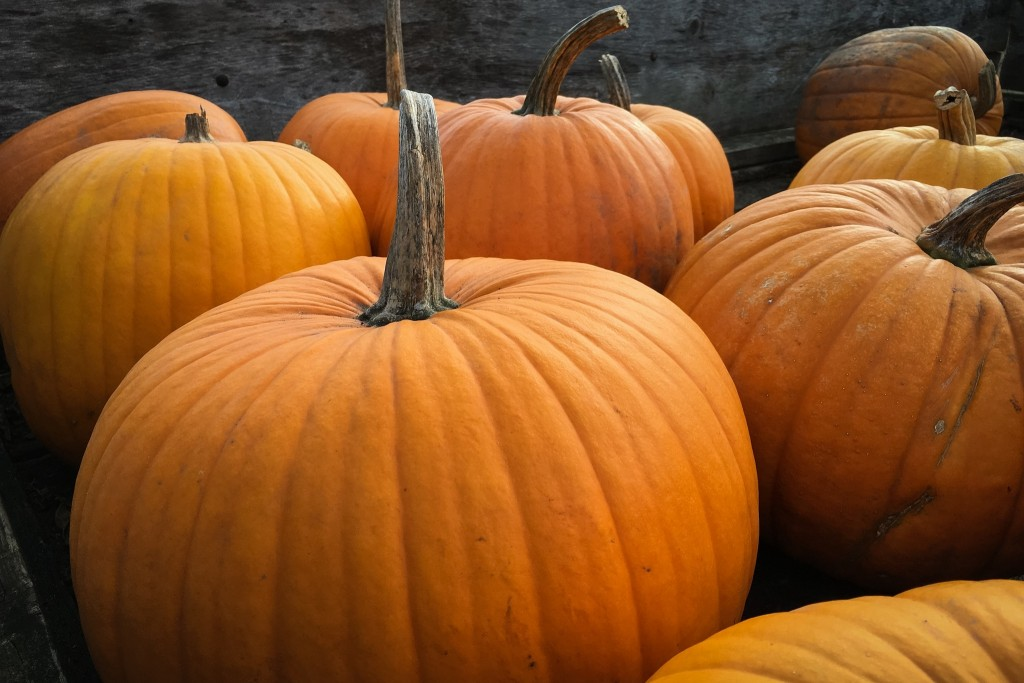 Contented Gypsy | Thanksgiving Pumpkins