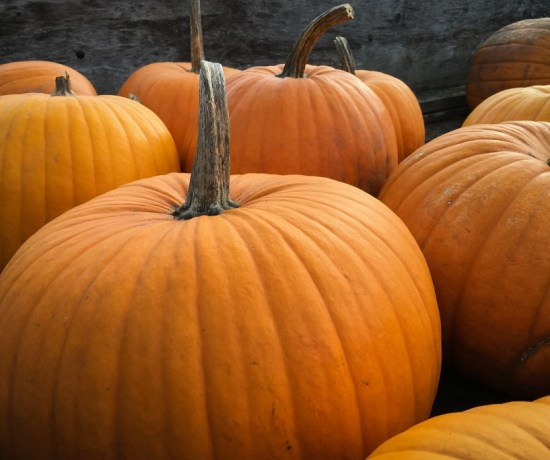 Contented Gypsy   Thanksgiving Pumpkins