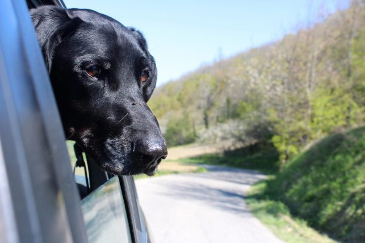 on the road with my dog