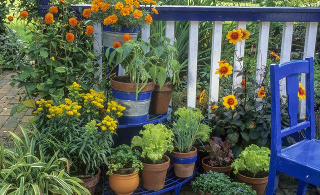 Apartment Gardening Tips The Home Depot