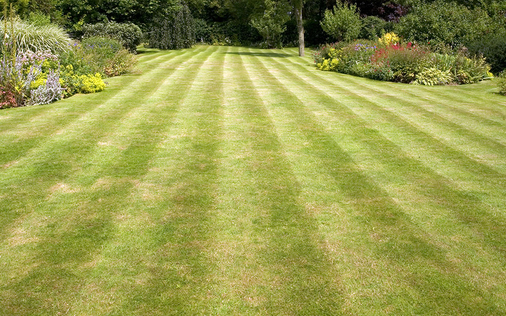 Striped lawn with alternating light and dark stripes bordered by flowers.