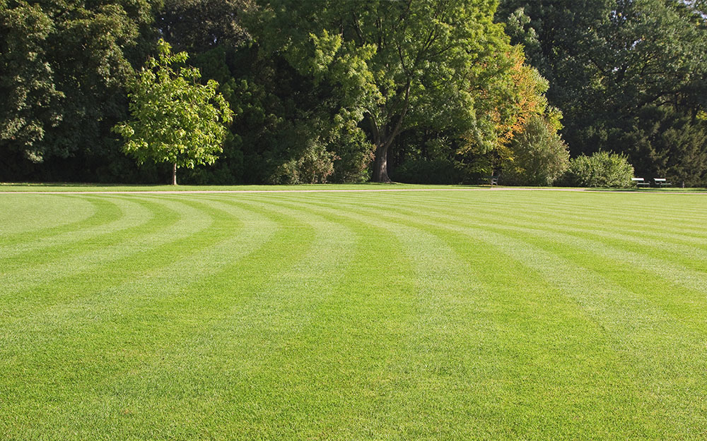 Striped lawn with circles.