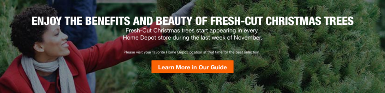 live evergreen trees home depot