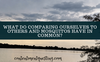 comparing ourselves to others, comparisons, compare self, inspiration, caming, mosquitos, compare ourselves