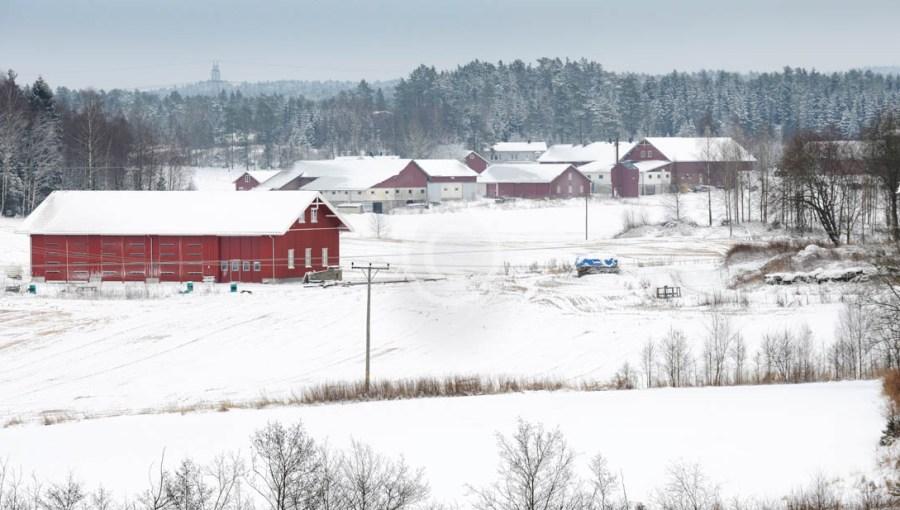 Mjølnerødgårdene i Rokke