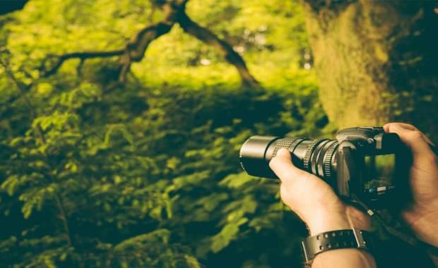 Careers in Wildlife Photography