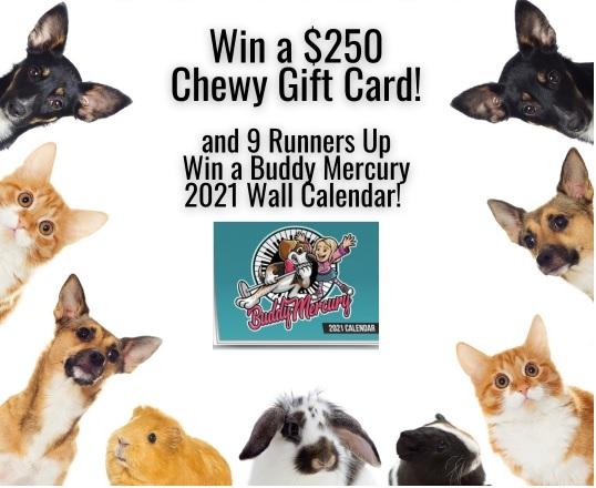 Buddy Mercury $250 Chewy Gift Card Contest