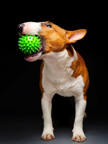 Paciência e truques ajudam a estimular o pet - Getty Images/iStockphoto - Getty Images/iStockphoto