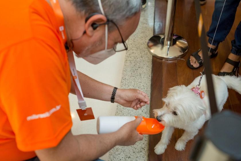 Pet already inaugurates its portable drinker acquired at Xiaomi's new store, in Barra Shopping, Rio de Janeiro - Xiaomi/Divulgação