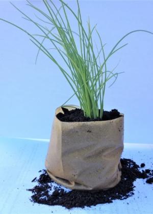 embalagem para mudas com plastico biodegradavel 1541520043018 300x420 - No ensino médio, jovem cria plástico com casca de maracujá e leva prêmios