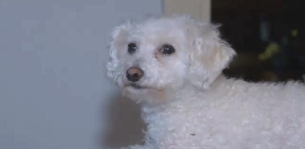 Zoey, o cãozinho, foi dar uma voltinha no céu e voltou são e salvo