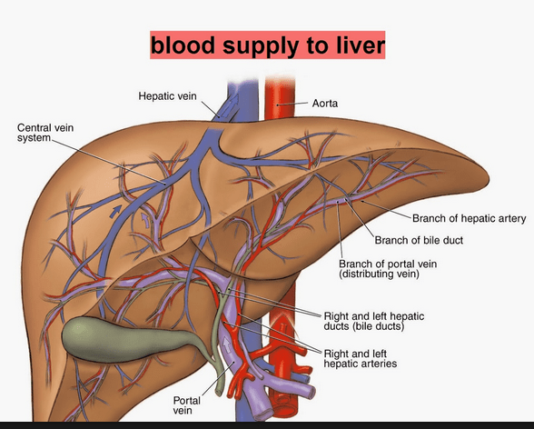 liver map ferguson