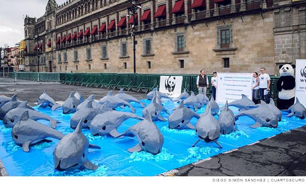 Protesta para conservar a la vaquita marina
