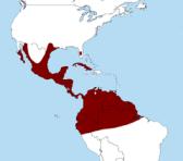 Caracara_cheriway_map
