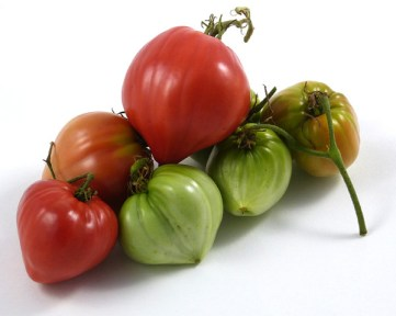 Bobbie Tomato