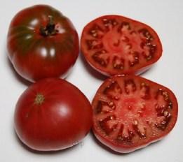 Boronia Tomato