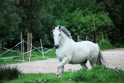 cheval blanc laine