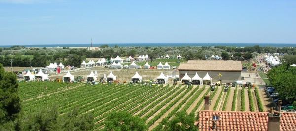 la-filiere-viti-vinicole-a-rendez-vous-a-innovigne-vin