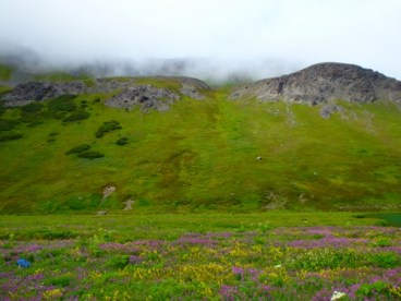 A high mountain valley abloom with wildflowers