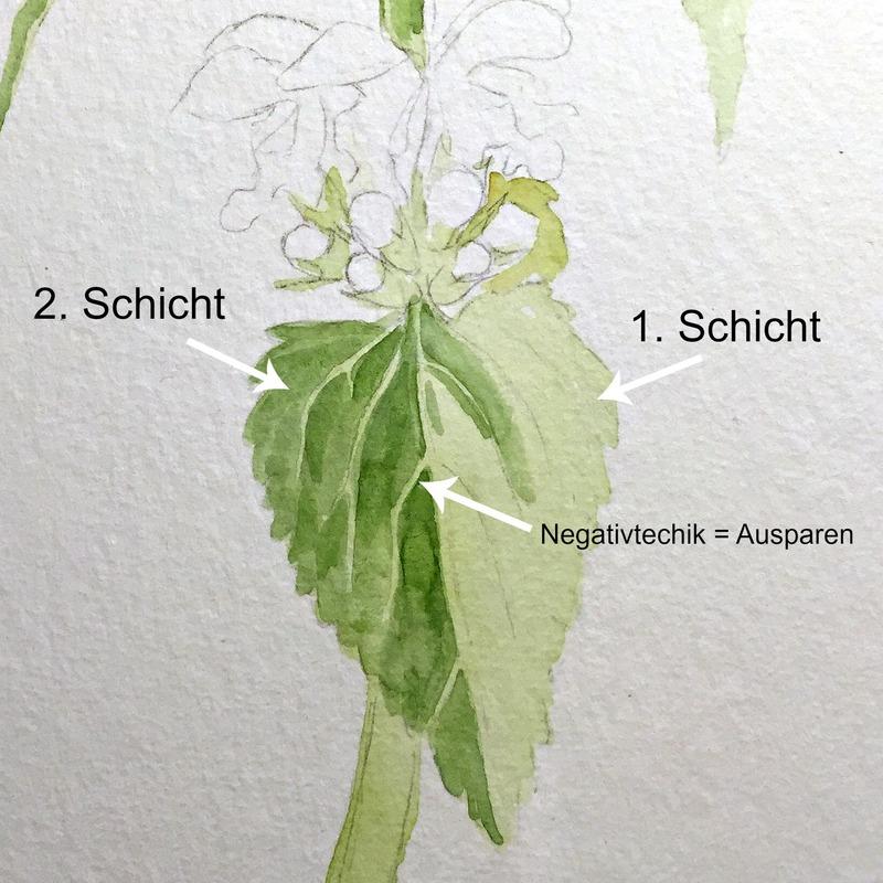 Blätter malen in Aquarell –Techniken und Anwendungsbeispiele, Taubnessel in Aquarell, Negativtechnik lernen