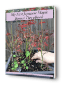 Japanese maple cover