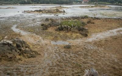 Eliminación de macroalgas en las marismas de Joyel