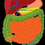 La importancia de tener una flora intestinal sana, cuídala y podrás acabar con la candidiasis crónica! Parte 1