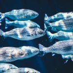 この差ってなに★(7月24日)魚の健康効果の差まとめ