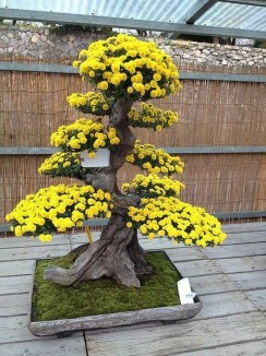 Creative Bonsai Trees Gardening Ideas For Backyard 11