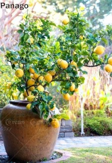 Creative Bonsai Trees Gardening Ideas For Backyard 12