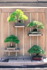 Creative Bonsai Trees Gardening Ideas For Backyard 14