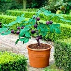 Creative Bonsai Trees Gardening Ideas For Backyard 16