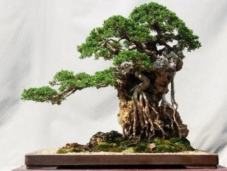 Creative Bonsai Trees Gardening Ideas For Backyard 20