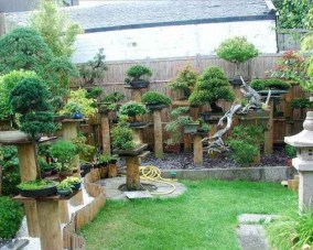 Creative Bonsai Trees Gardening Ideas For Backyard 25