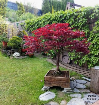 Creative Bonsai Trees Gardening Ideas For Backyard 30