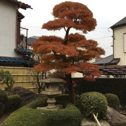 Creative Bonsai Trees Gardening Ideas For Backyard 31