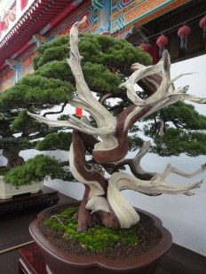 Creative Bonsai Trees Gardening Ideas For Backyard 39