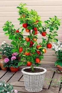 Creative Bonsai Trees Gardening Ideas For Backyard 41
