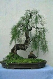 Creative Bonsai Trees Gardening Ideas For Backyard 43