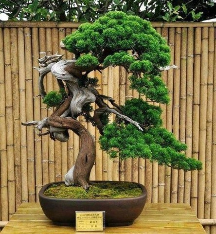 Creative Bonsai Trees Gardening Ideas For Backyard 45