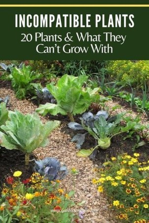 Best Ideas To Growing Vegetable Garden 09