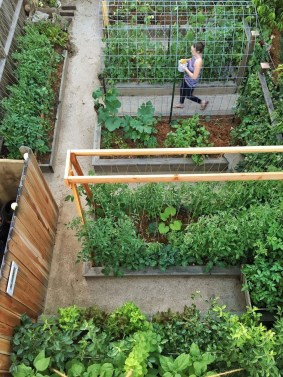 Best Ideas To Growing Vegetable Garden 24