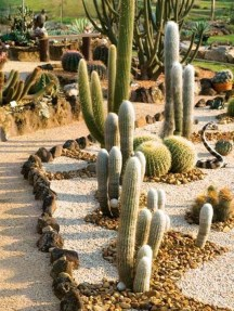 Awesome Succulent Garden Ideas In Your Backyard 22
