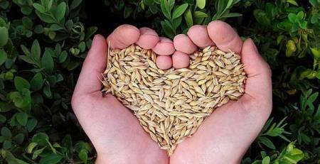 mani cereali forma cuore
