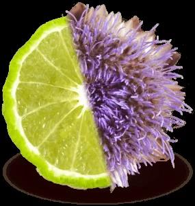 Bergacyn® - Frazione polifenolica di Bergamotto e Cynara Cardunculus