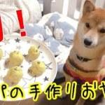 【柴犬】手作りおやつにパパが初挑戦!さつまいも使った簡単料理