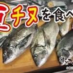 【男の料理】夏チヌを捌いて食べる!